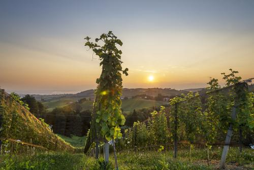 奥地利葡萄酒文化是怎样的?