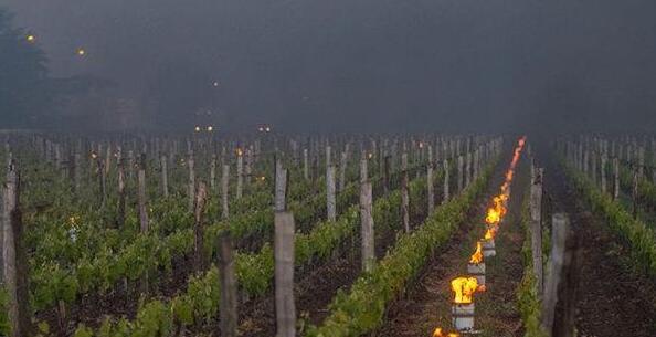 到了2100年,气候变暖将会严重影响法国葡萄酒产业发展