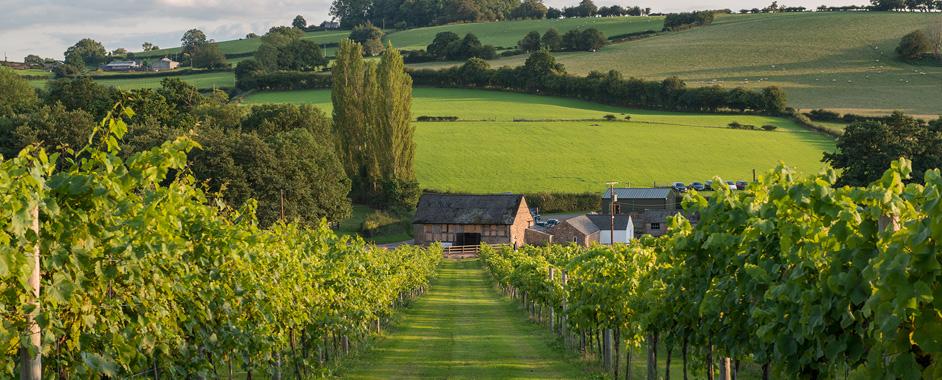 未来威尔士酒庄的数量将会增加至23个
