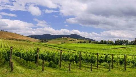 澳洲葡萄酒 走进澳洲五大葡萄酒庄
