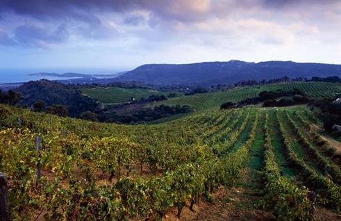 法国科西嘉产区 走进美丽的科西嘉葡萄酒产区