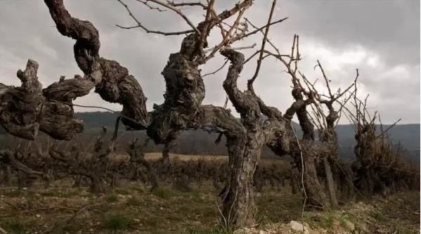 人生百态与智者非凡--西班牙卡趣罗系列&法国高雅系列