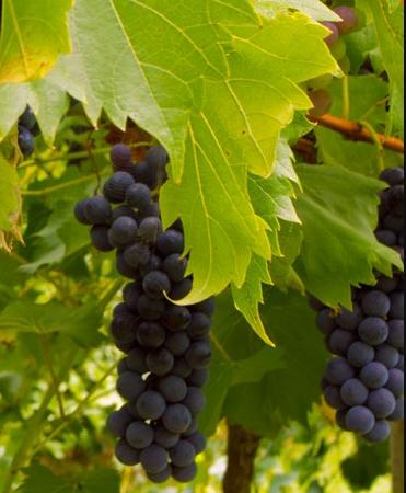 森野酒业(Senye Winery)