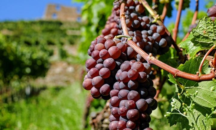 山东齐鲁酒业(Qilu Winery)