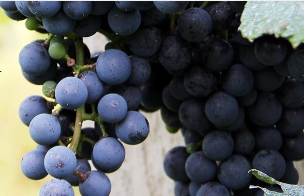 吉林斯普瑞酒业有限公司(Spring Winery)