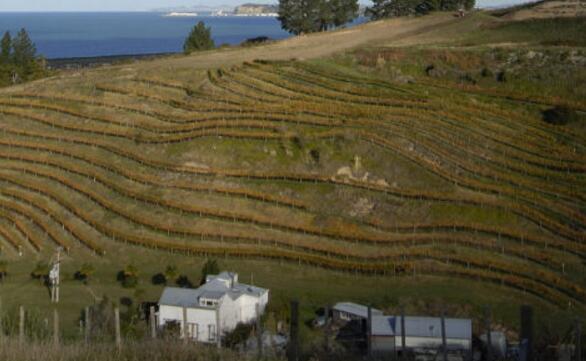 埃斯克谷酒莊(Esk Valley)——新西蘭精品酒莊