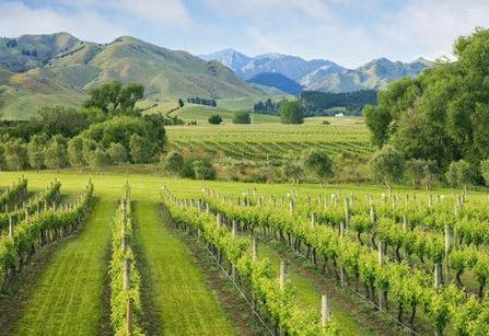 新西兰酒庄联合成立了马尔堡产区组织AMW