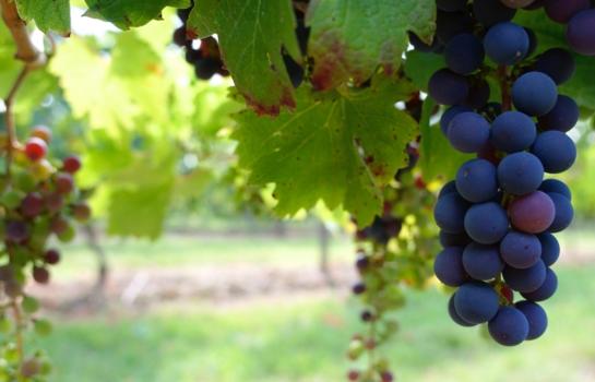 智利葡萄酒产区 智利中央山谷葡萄酒产区
