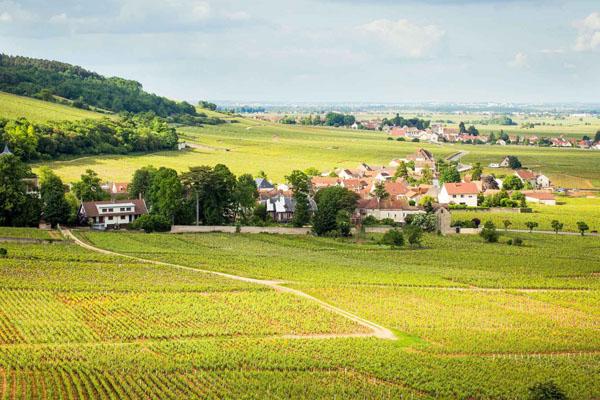 谦卑又固执的勃艮第人,酿出最骄傲的葡萄酒
