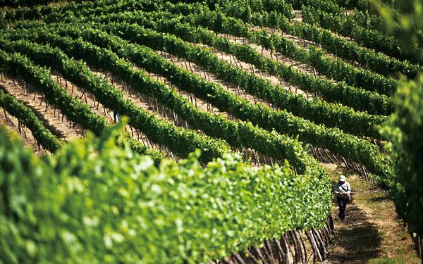 智利之光 ——走近智利精品葡萄酒