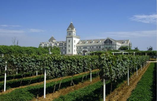 烟台政府注资1000万元用于当地果蔬和葡萄酒产业发展