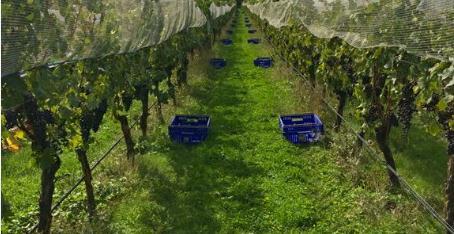 合力酒庄——小型的现代化精品酒庄