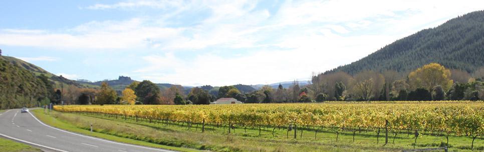 佩塔内酒庄——新西兰家庭式葡萄酒庄