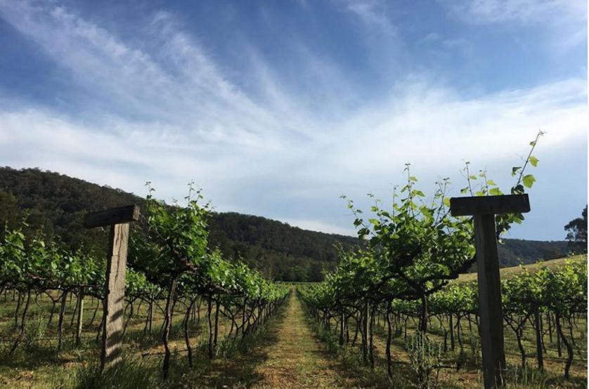 史东尼赫斯酒庄(Stonehurst Wines)