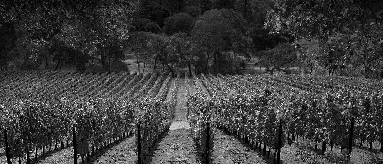 霍贝尔酒庄(Hobel Wines)