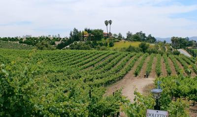 欧罗巴村酒庄:旧世界风格的新世界葡萄酒庄