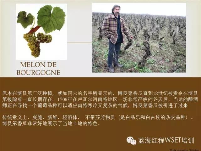 蓝海红程代理的多家名庄已被选入《2016-2017年贝丹德梭葡萄酒年鉴》