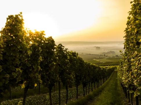 走进纳帕谷葡萄酒曲折的历史