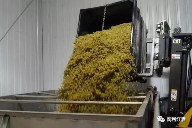加盟宾利酒业,去探索一瓶宾利葡萄酒的诞生:从葡萄到葡萄酒