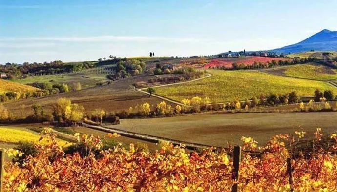 Global Wine Weekly | 全球葡萄酒周报