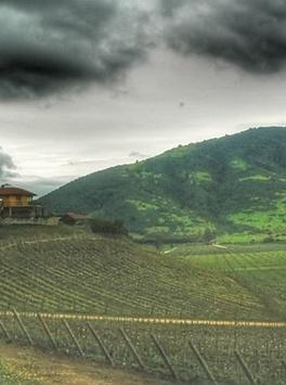 世界上最被低估的葡萄酒:智利黑皮诺