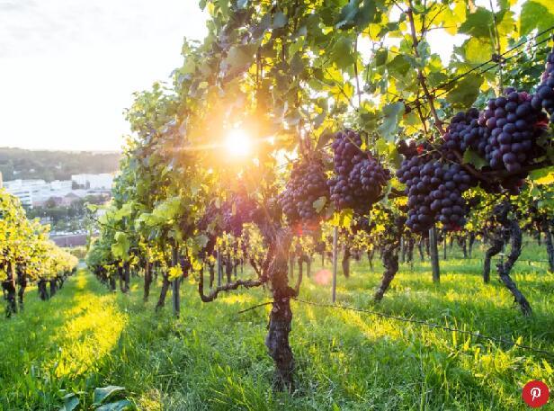 2018年美国葡萄酒业走向可持续发展 风靡全球的趋势