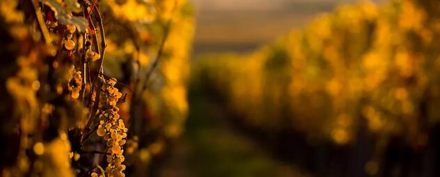 """西美西味  11月9-11日,西班牙千年酿酒文化,今朝""""陶醉""""于Interwine国际名酒展"""