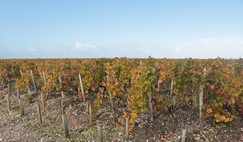 2018年勃艮第葡萄酒产量有望达到2.7亿升