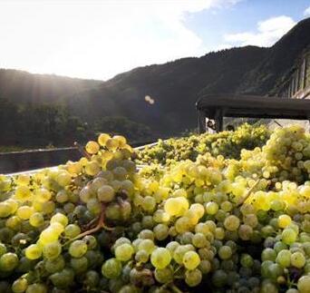 2018年德国葡萄产量迎来大丰收