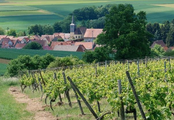 美国葡萄酒历史 俄勒冈州葡萄酒工业的历史