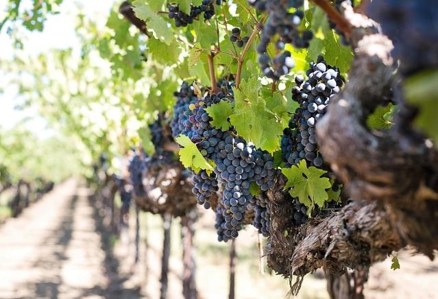 德国葡萄酒产区 法尔茨葡萄酒生产历史