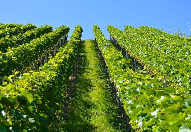 希腊葡萄酒和希腊葡萄酒产区简介