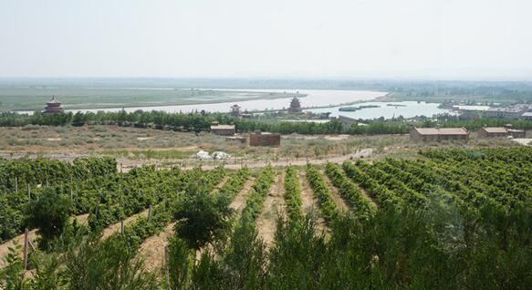 青铜峡(Qingtongxia)产区