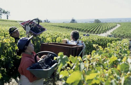 """波尔多葡萄酒行业协会公布""""展望2025""""计划"""