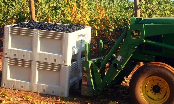 葡萄的生命周期:从种植到收获再到酿制