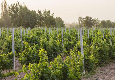 贺兰芳华酒庄(Holyfun Winery)