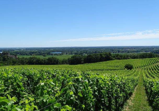 法国波尔多葡萄酒产区指南