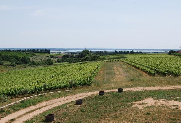 2分钟读懂法国波尔多左岸葡萄酒产区