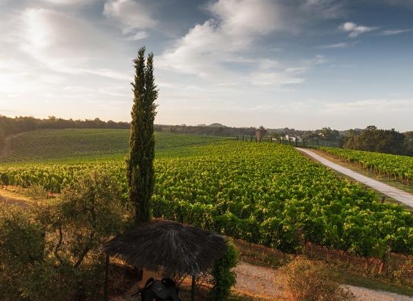 意大利最佳葡萄酒产区指南