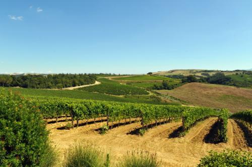 普罗旺斯葡萄酒风情,大家有领略过吗?