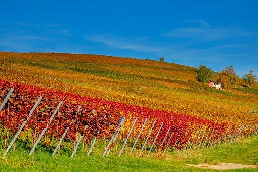 欧洲的童话:大家知道普罗旺斯葡萄酒吗?