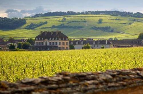 大家体验过纳帕的葡萄酒之旅吗?