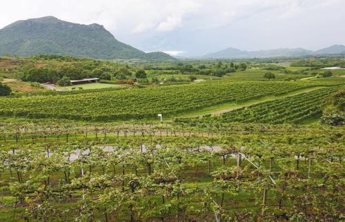 如何把德国的葡萄酒带到中国来呢?