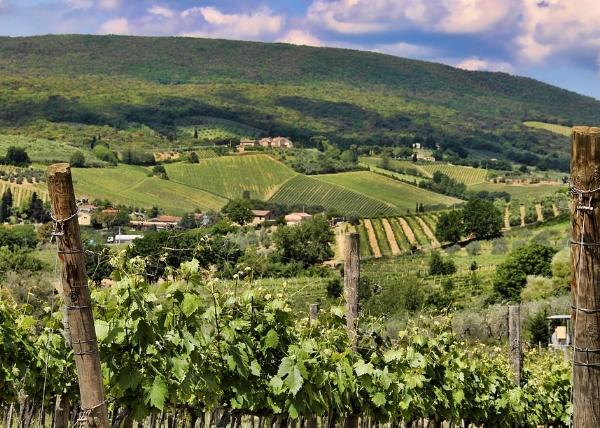 意大利葡萄酒特点、品种指南