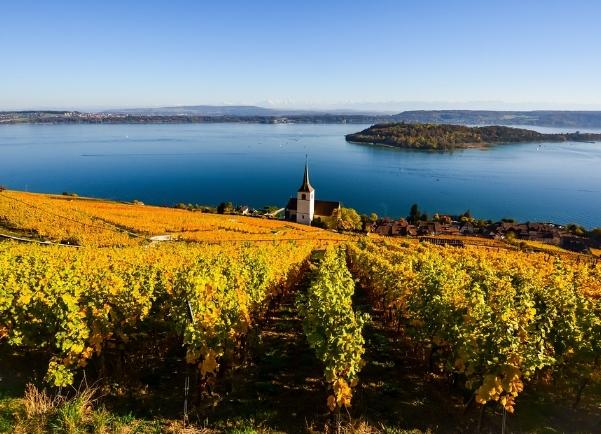 旧世界葡萄酒:葡萄酒历史起源于欧洲
