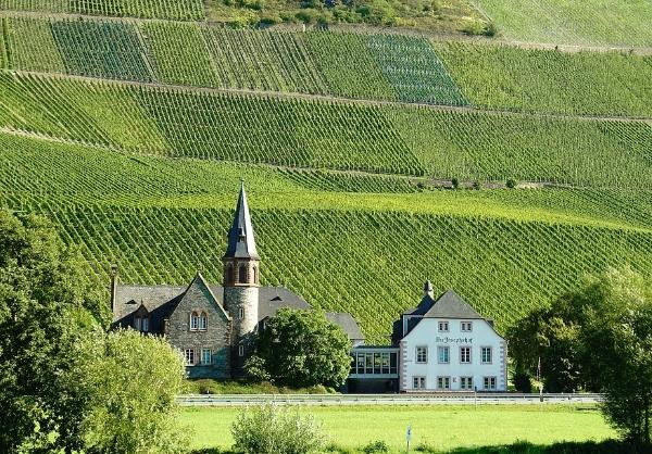 德国葡萄酒的终极指南