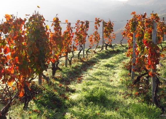 葡萄牙葡萄酒产区指南——杜奥Dão