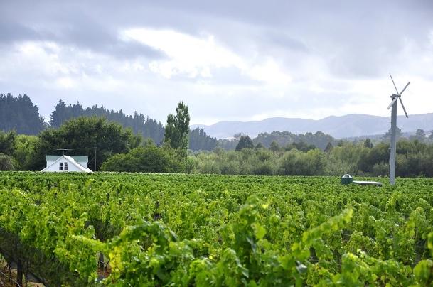 新西兰葡萄酒产区——怀拉拉帕(Wairarapa)