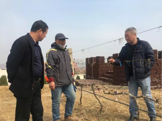 葡萄酒学院院长李华教授来蓬莱产区进行技术指导