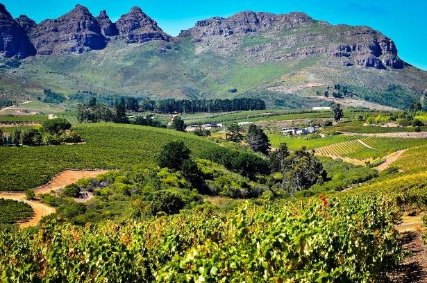 南非葡萄酒产区——康斯坦蒂亚(Constantia)